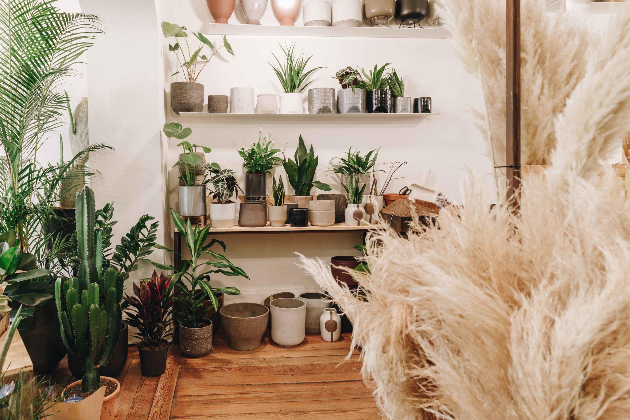 Plante D Intérieur Tendance plantes d'intérieur, déco tendance - terrariums - agave boutique